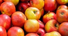 Apfelsaft-herstellen-dampfentsafter